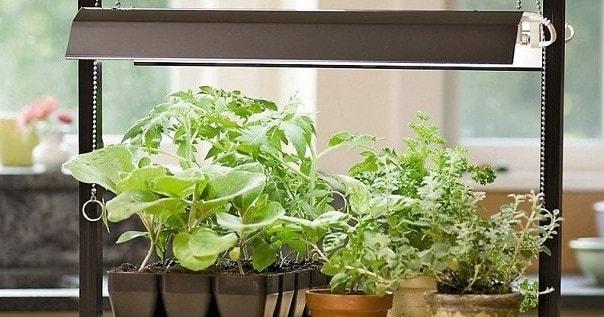 Подсветка цветов светодиодными лампами для растений