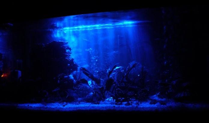 Синяя подсветка аквариума